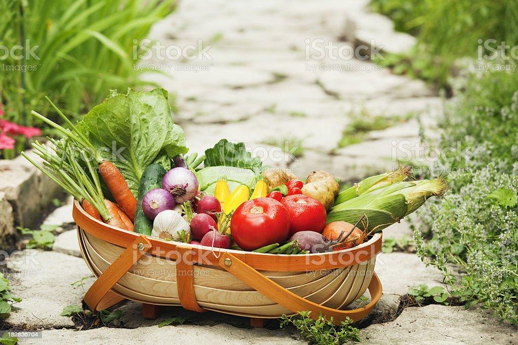 Summer Fresh Garden Vegetable in Harvest Basket Hz royalty-free stock photo