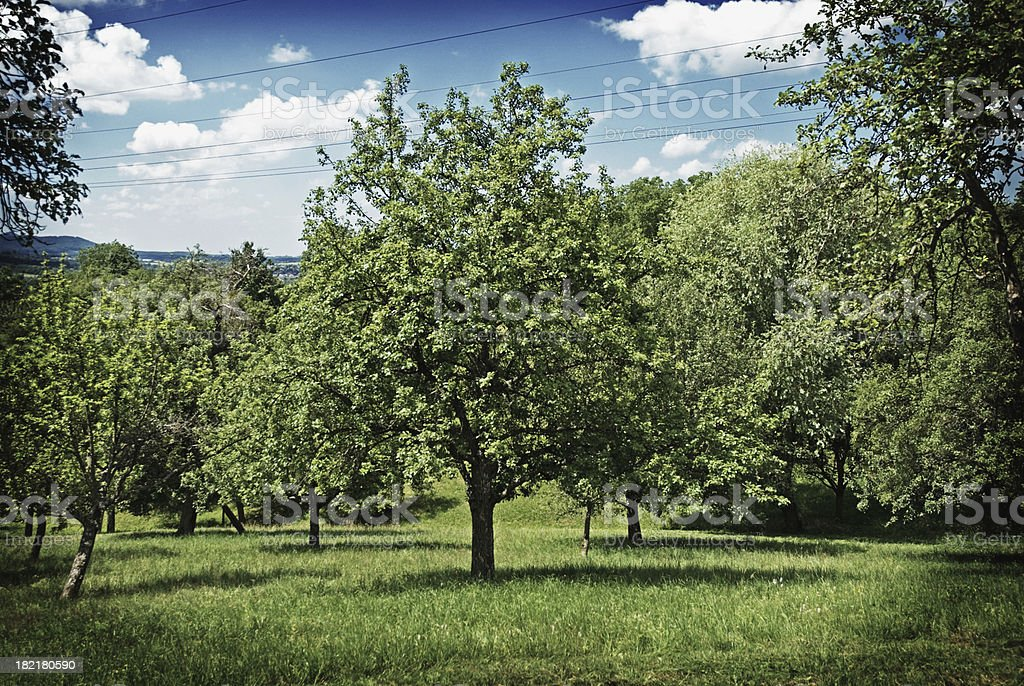 Summer Fruit Trees Landscape royalty-free stock photo