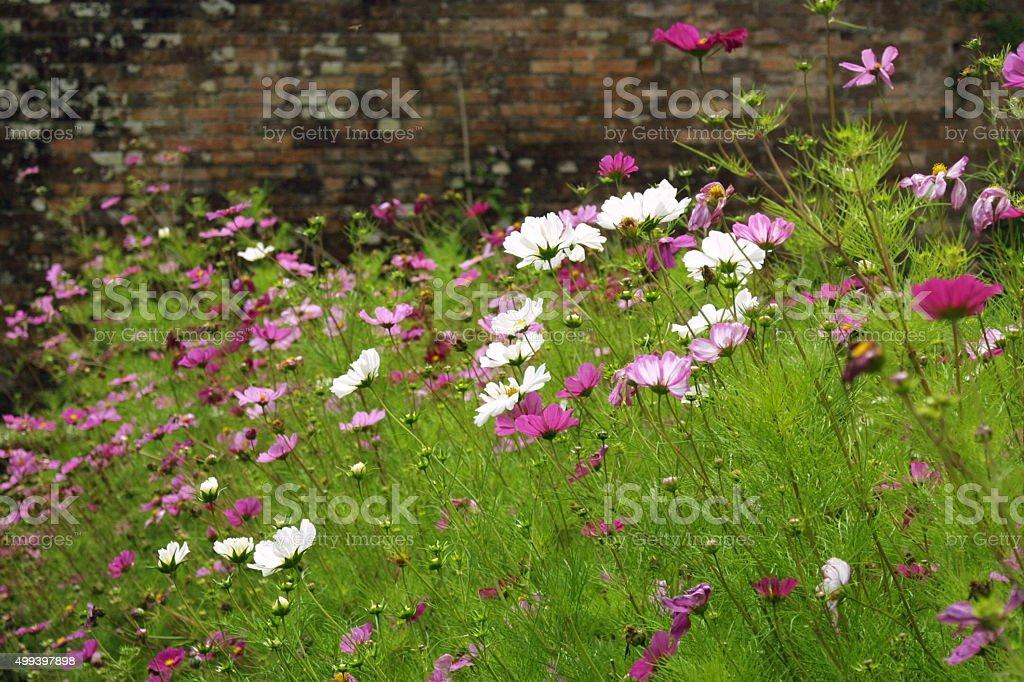 Summer garden border stock photo