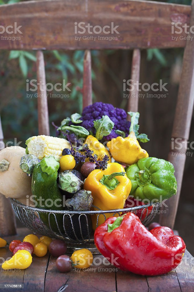 Summer garden harvest on a wooden chair royalty-free stock photo