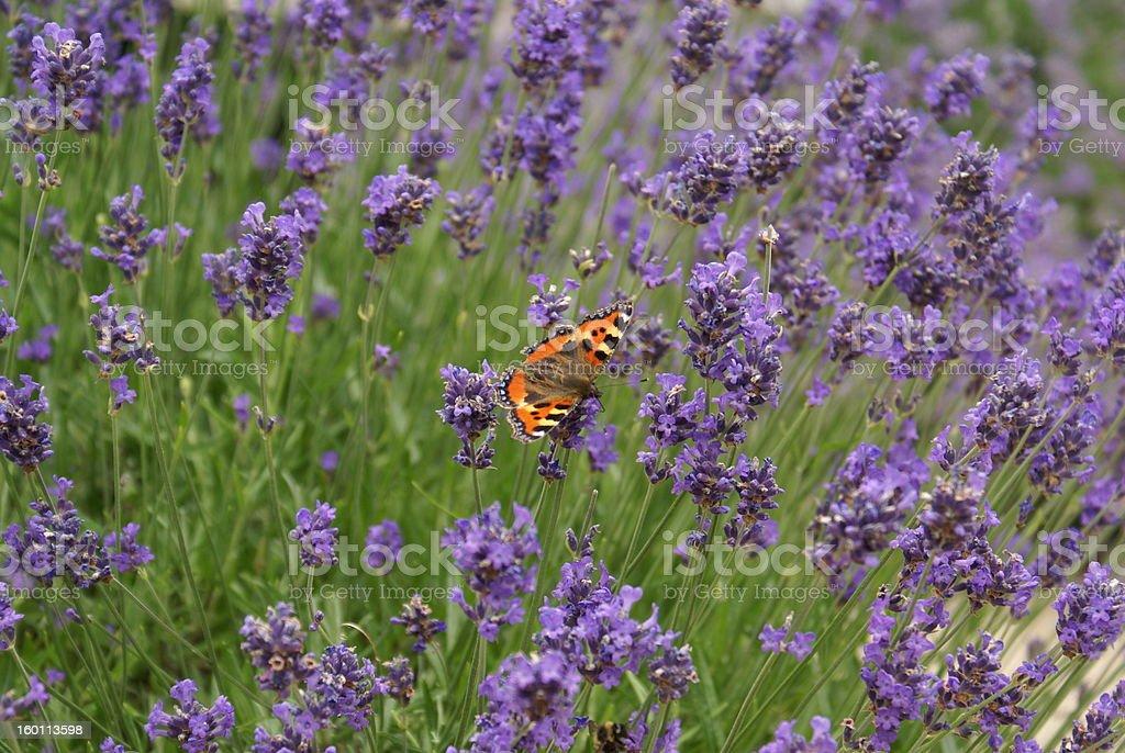 Ogród letni zbiór zdjęć royalty-free