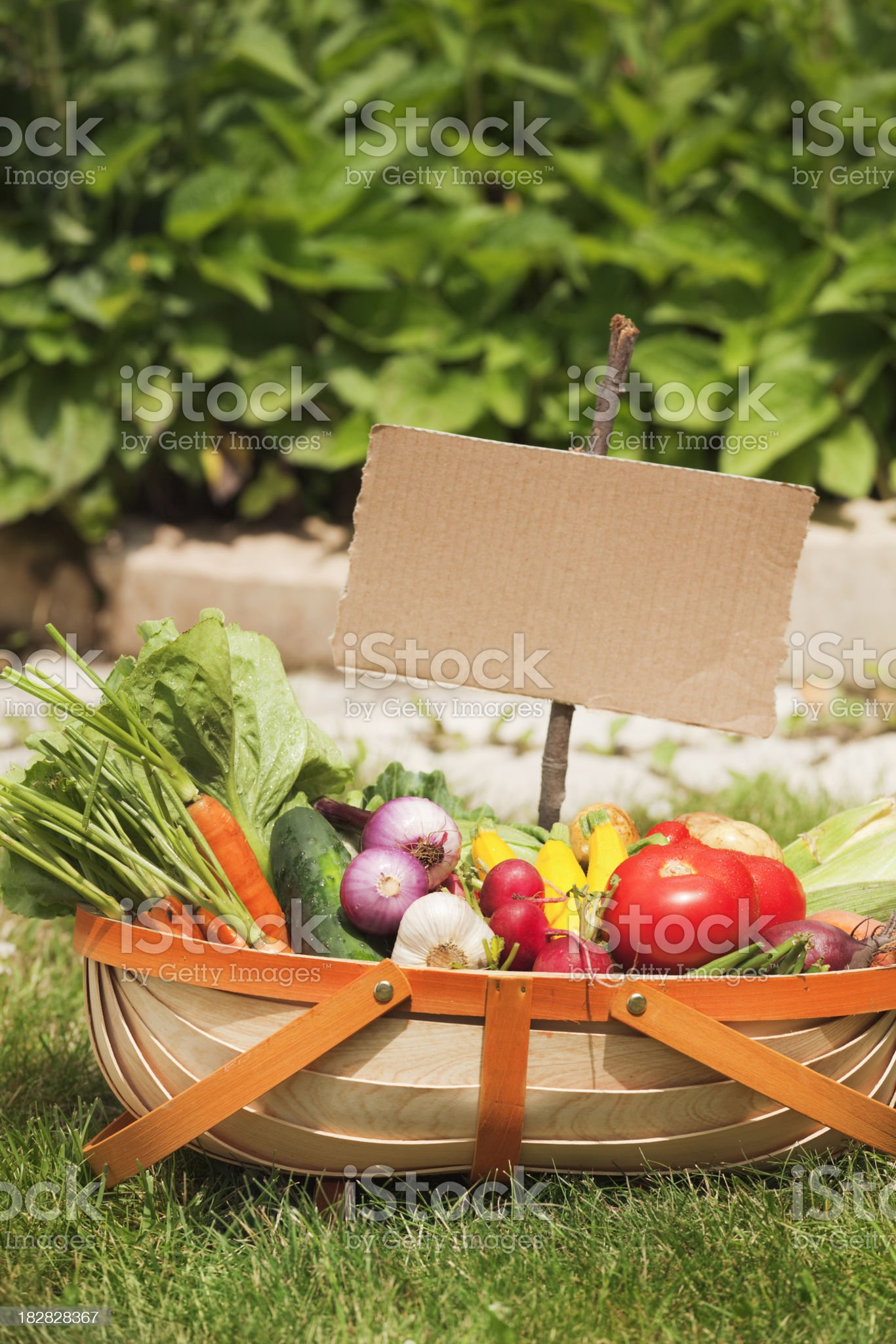 Summer Garden Vegetable Harvest in Basket with Cardboard Sign Vt royalty-free stock photo