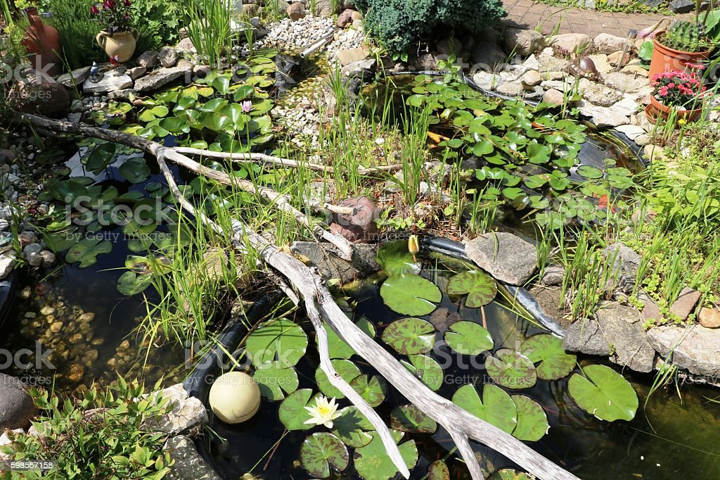Summer garden with a small pond in Germany stock photo