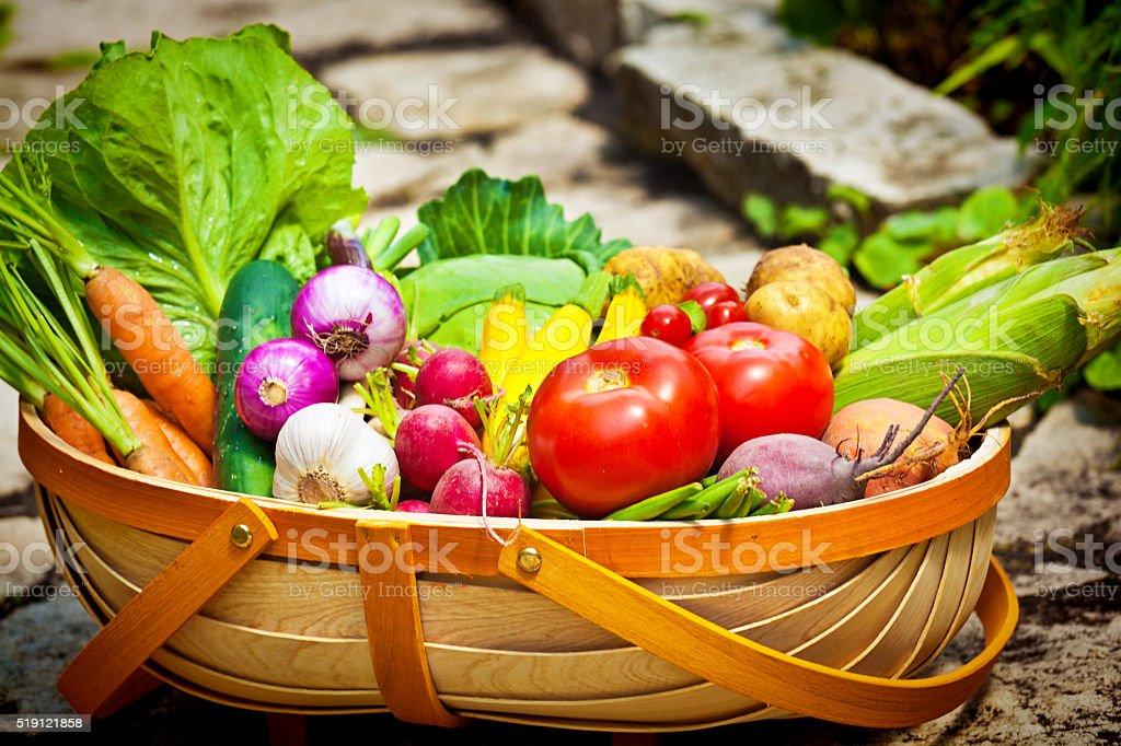 Summer Gardening Harvest of Fresh Vegetables in Market Basket stock photo