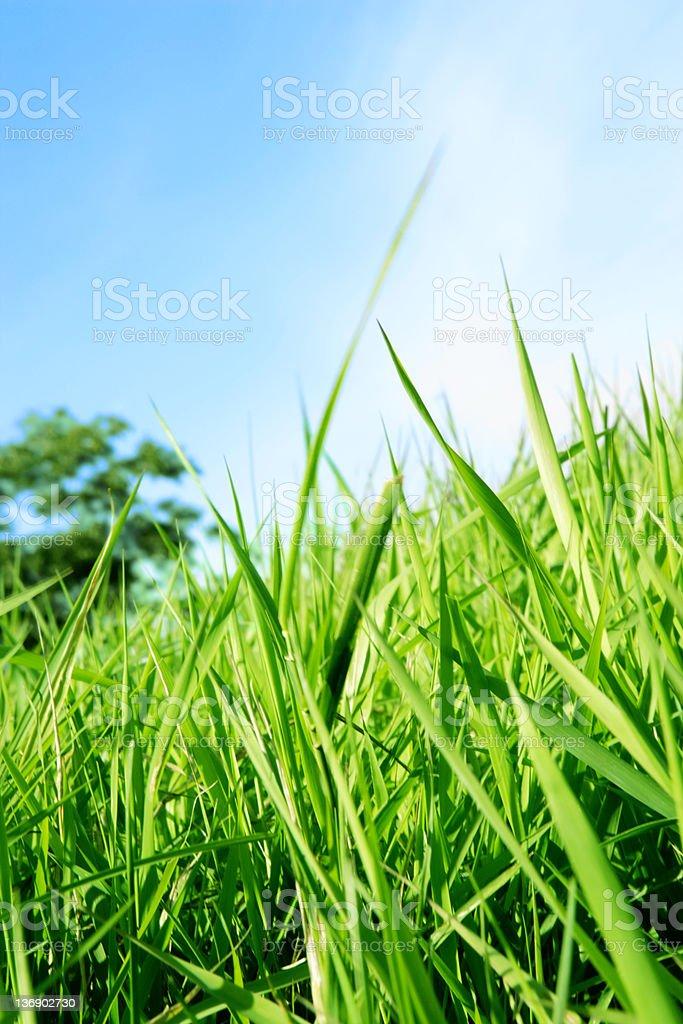 XXL summer grass close-up stock photo