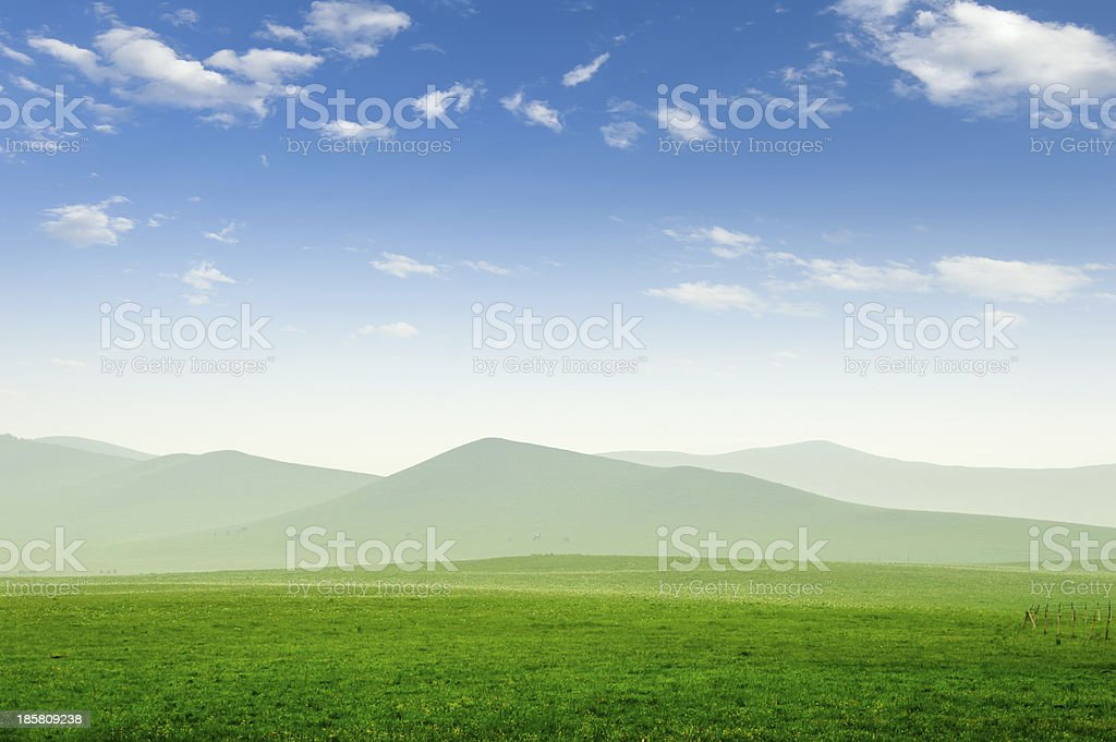 Summer grass field royalty-free stock photo