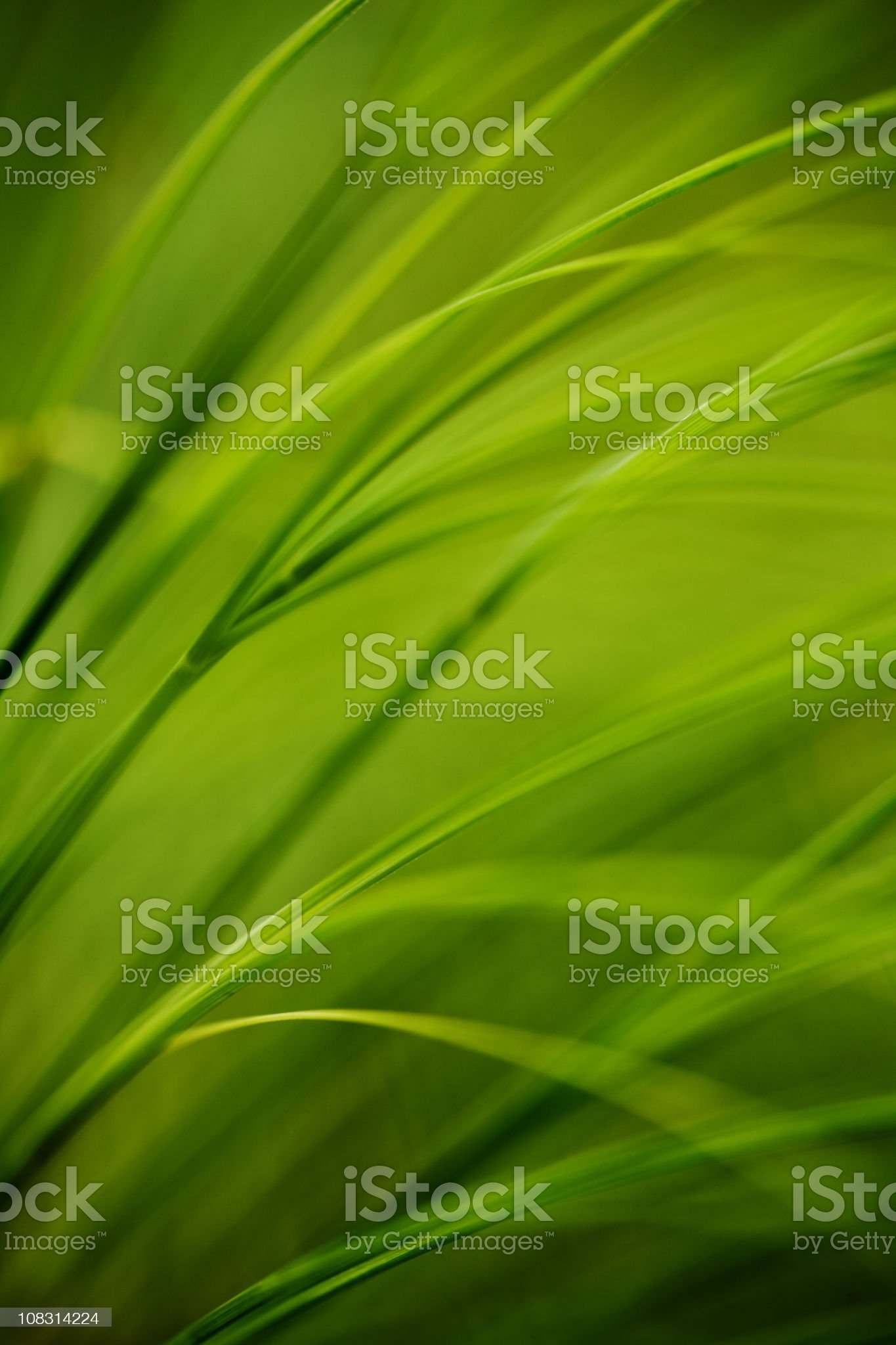 summer grass royalty-free stock photo