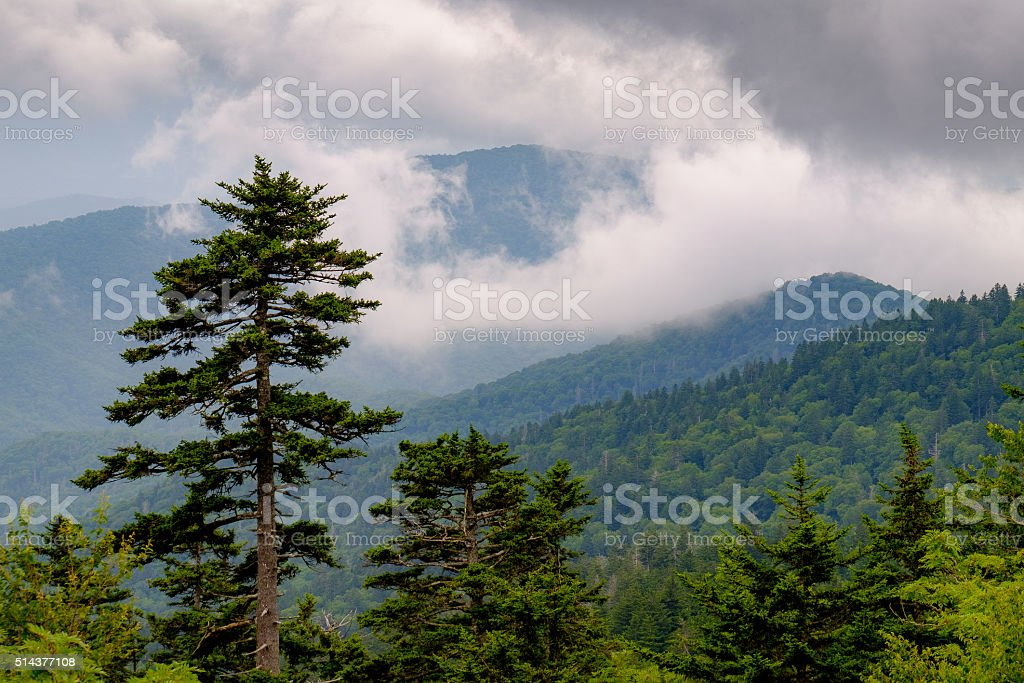 Summer Great Smoky Mountains stock photo
