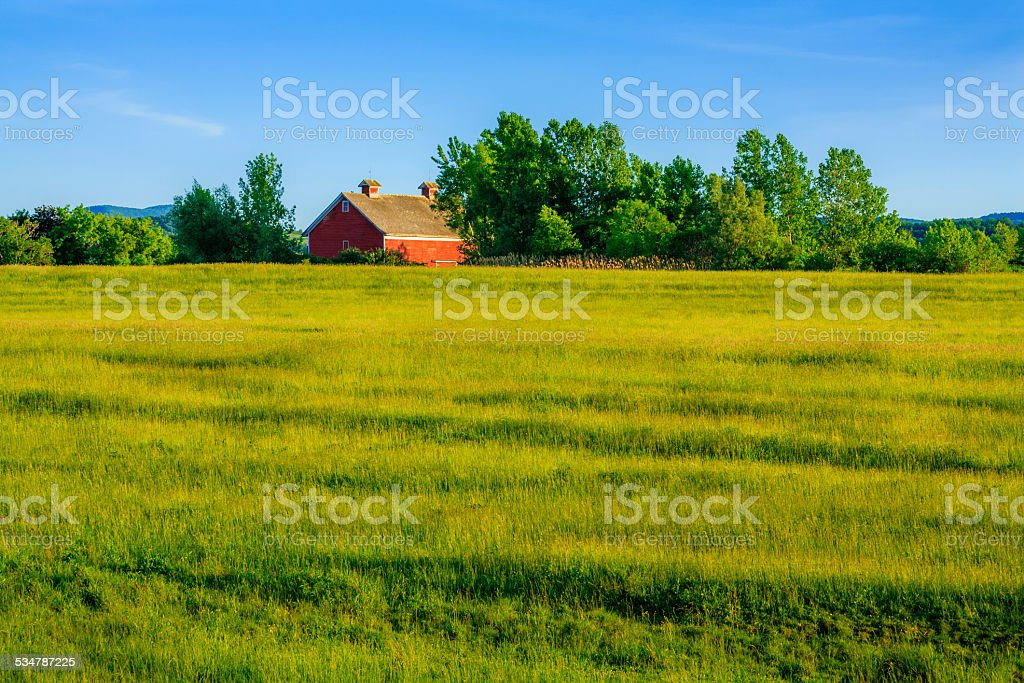 Summer green meadow, late afternoon, trees, red barn in background stock photo