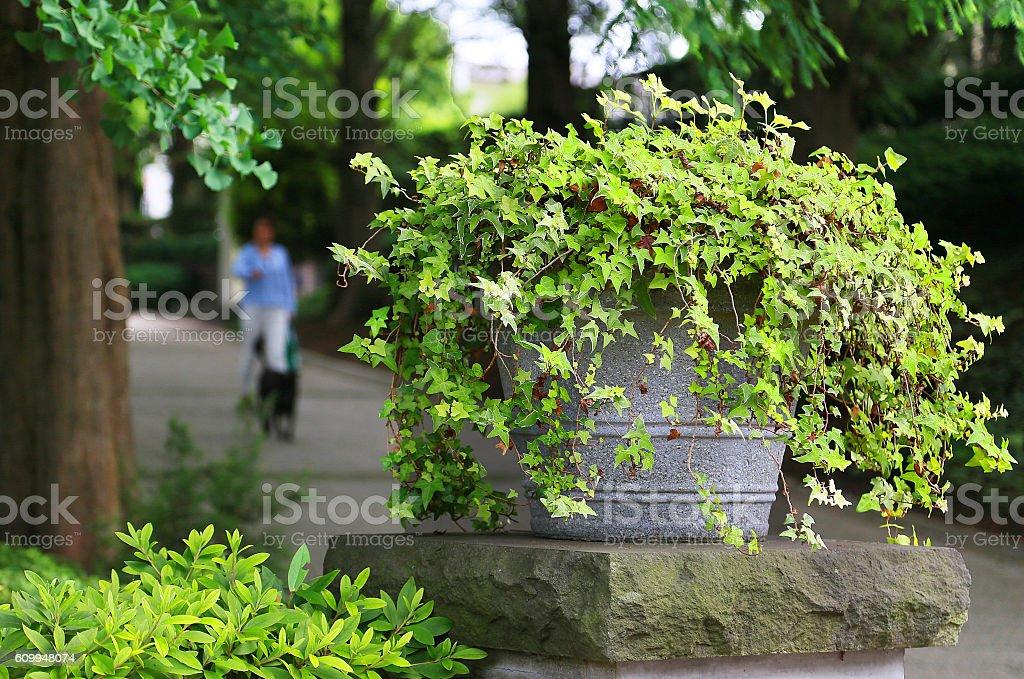 Verano, verde foto de stock libre de derechos