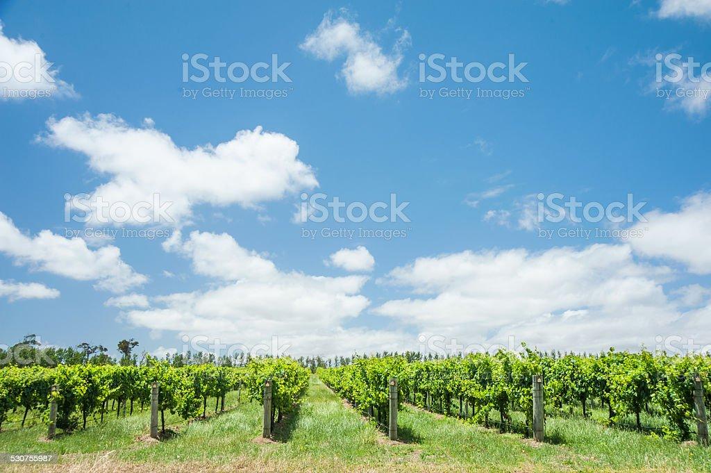Summer Growth stock photo