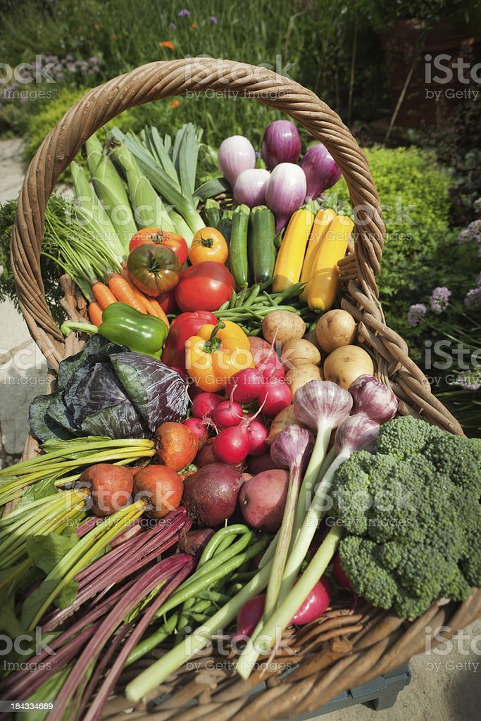 Summer Harvest of Fresh Garden Vegetable Varieties in Wicker Basket stock photo