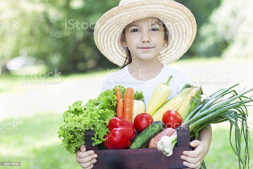 Summer Harvest of Fresh Vegetables royalty-free stock photo