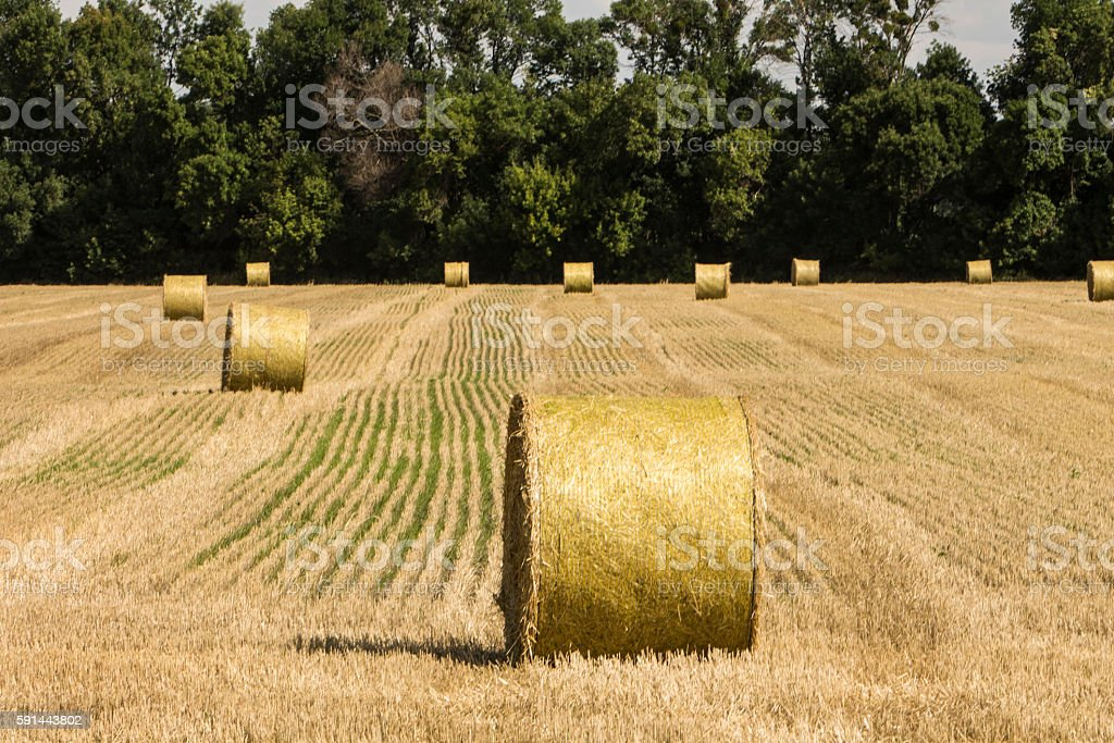 Summer. Harvest of hay in the countryside stock photo