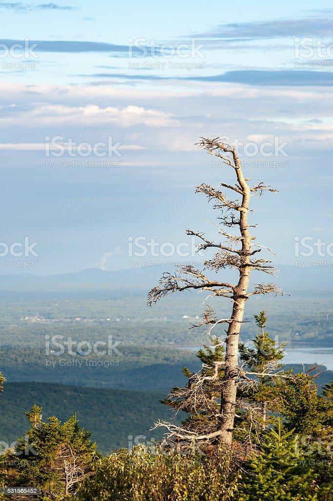 Summer haze at Cadillac Mountain stock photo