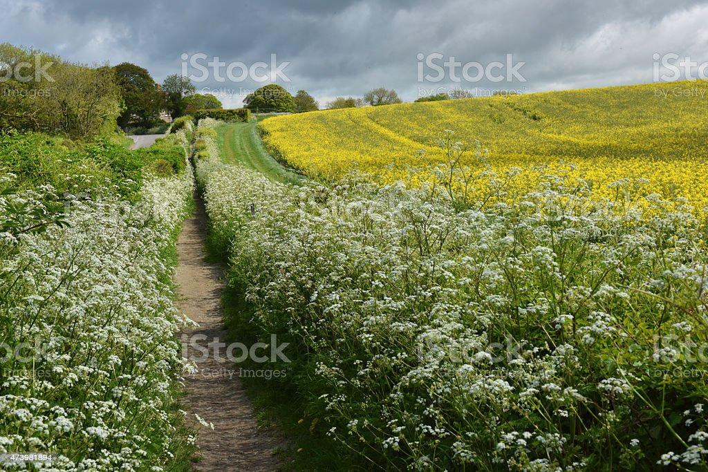 Summer hedgerows stock photo