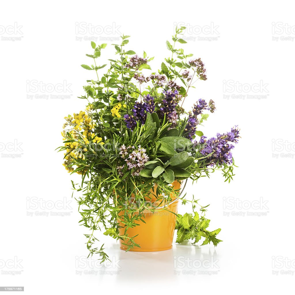 Summer Herbs royalty-free stock photo