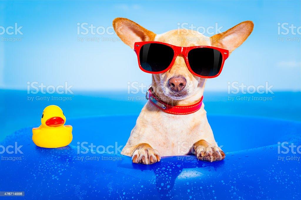 summer holiday dog stock photo