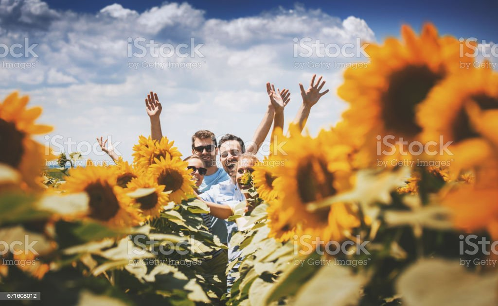 Summer in a countryside. stock photo