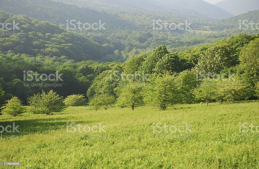 Summer in Appalachia royalty-free stock photo