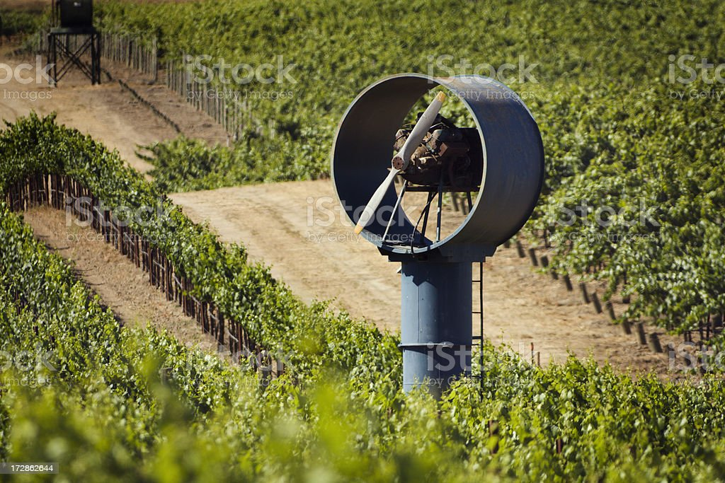 Summer in Carneros Vineyard royalty-free stock photo