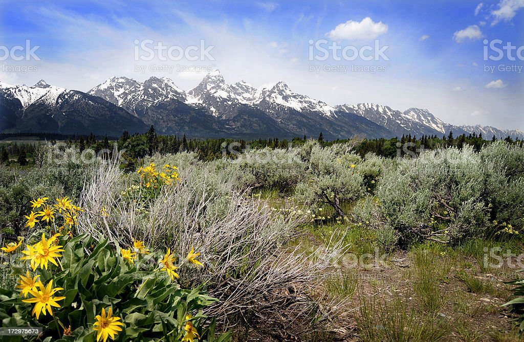 Summer in Grand Teton National Park royalty-free stock photo