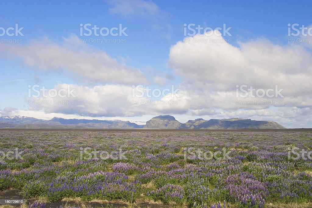 Summer in Iceland stock photo