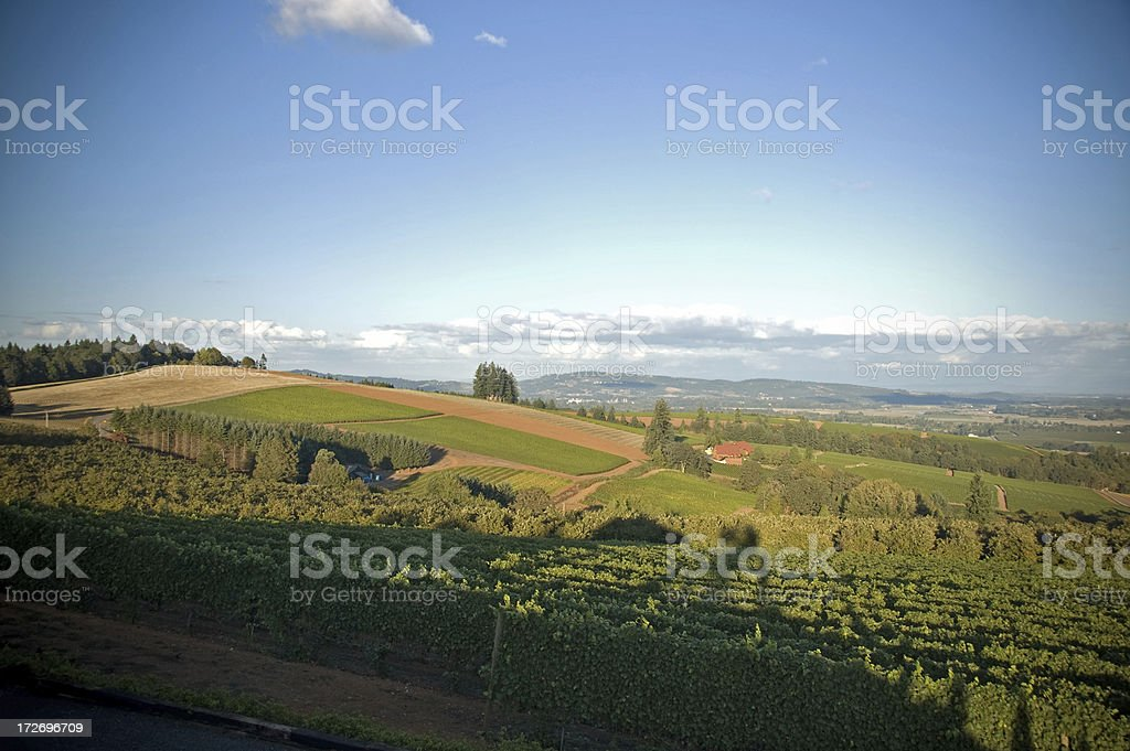 Summer in Oregon's Willamette Valley royalty-free stock photo