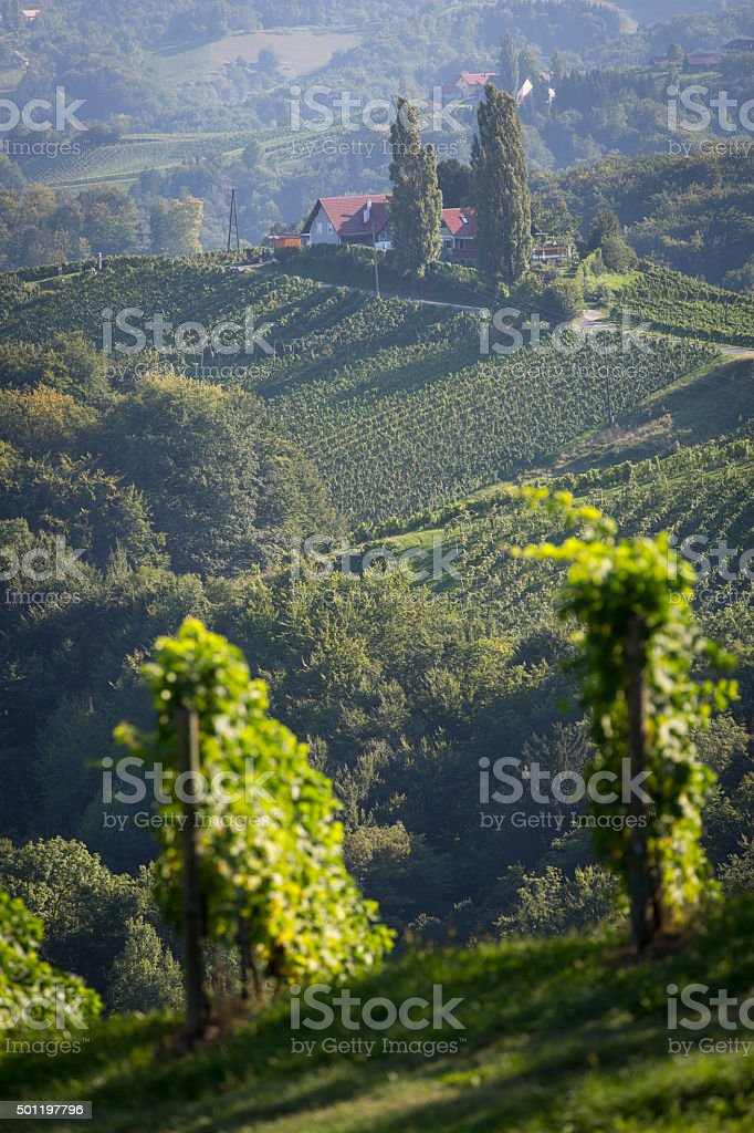 summer in southern styria, an old wine growing country in austria stock photo
