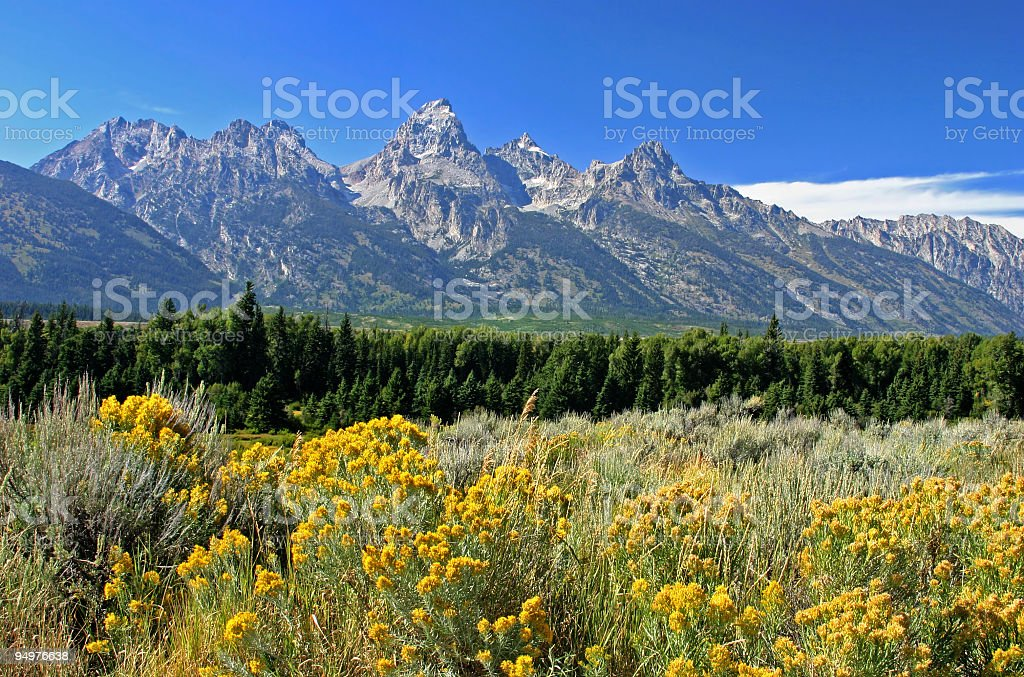Summer in the Grand Tetons royalty-free stock photo