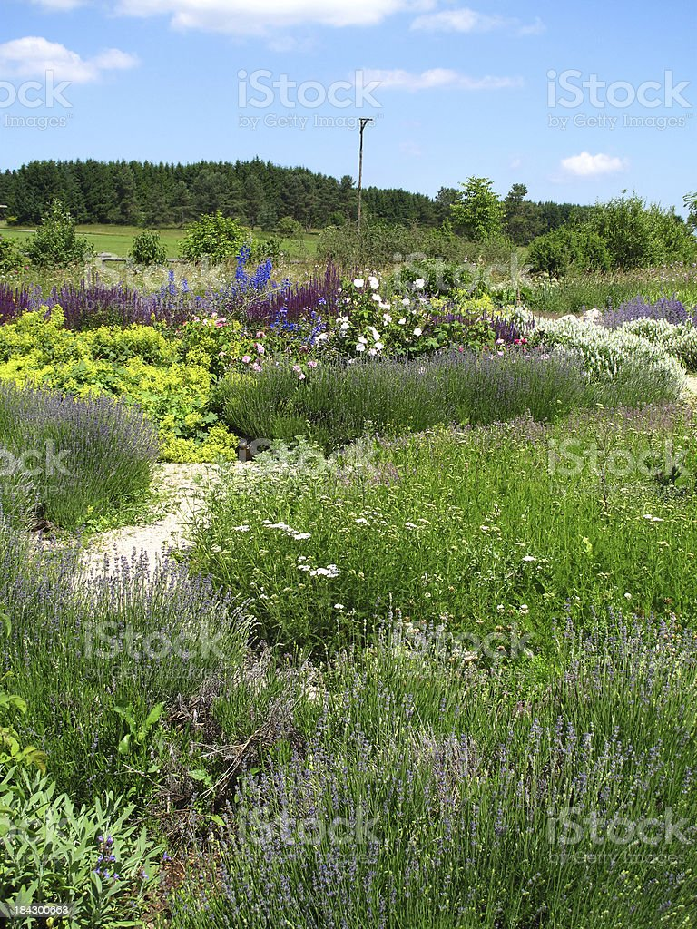Summer in the herb garden. royalty-free stock photo