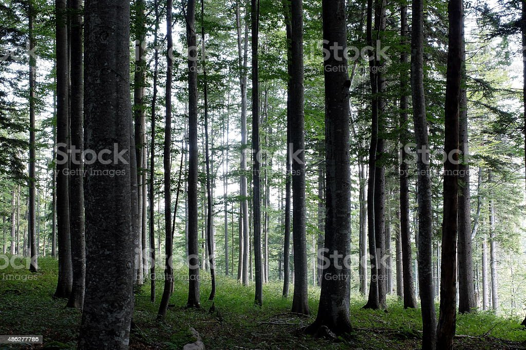 Summer in the mountain forest stock photo