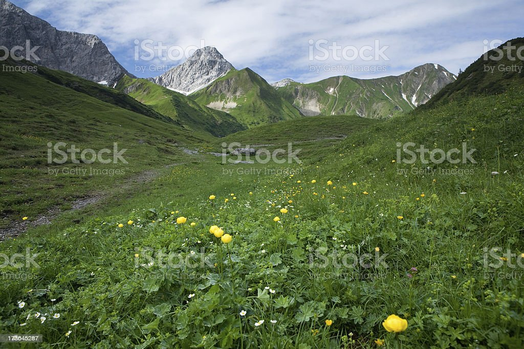summer in the mountains royalty-free stock photo