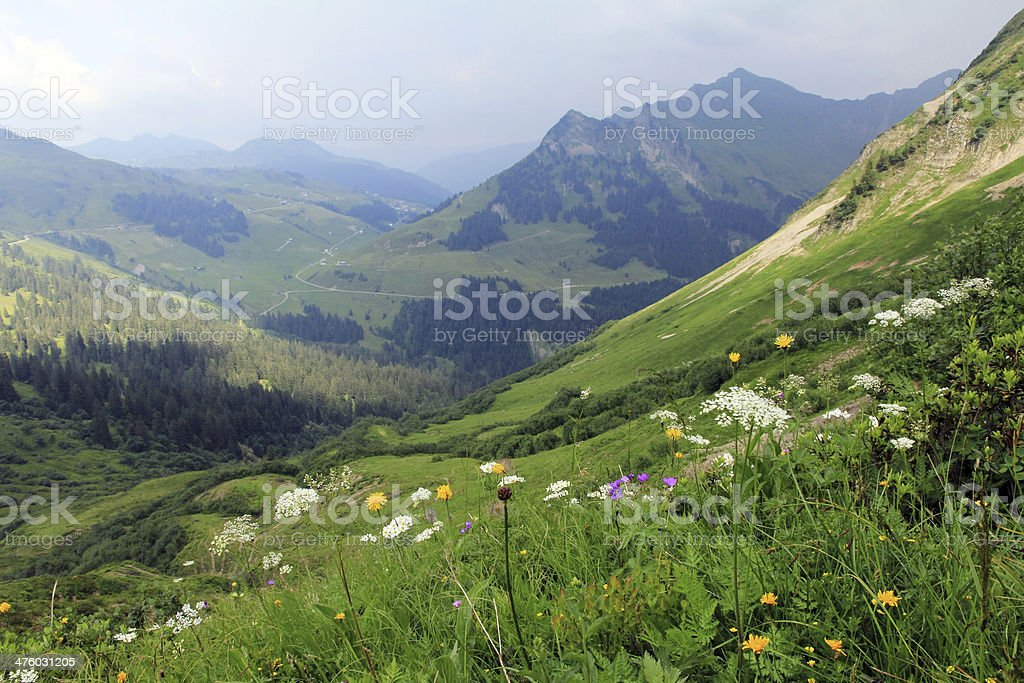 summer in the mountains stock photo