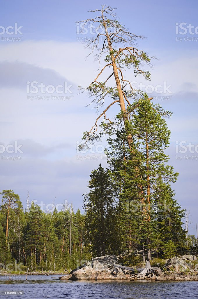 Summer in the north royalty-free stock photo