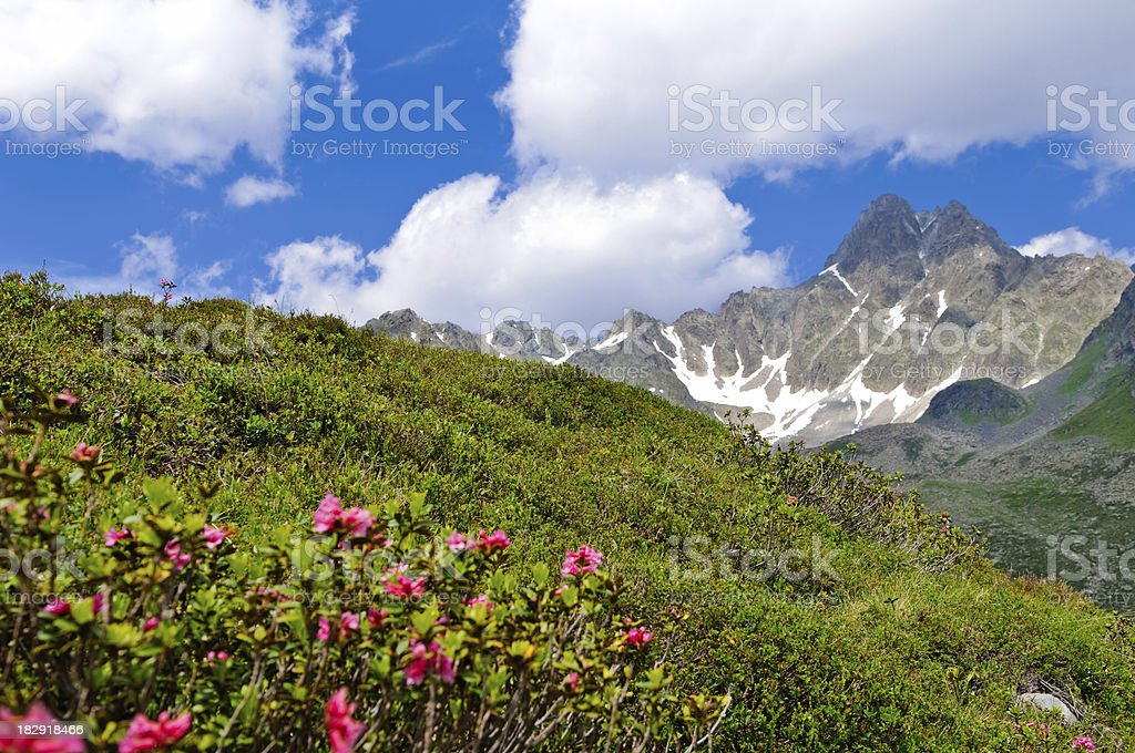 Summer in Tirol royalty-free stock photo