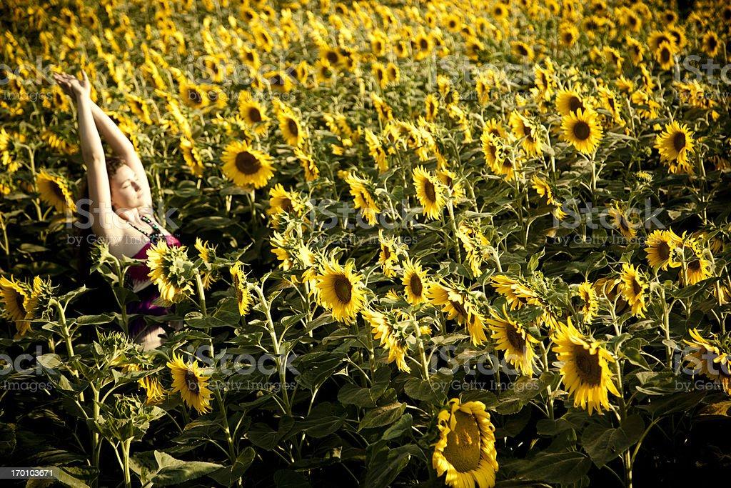 Summer in tuscany royalty-free stock photo