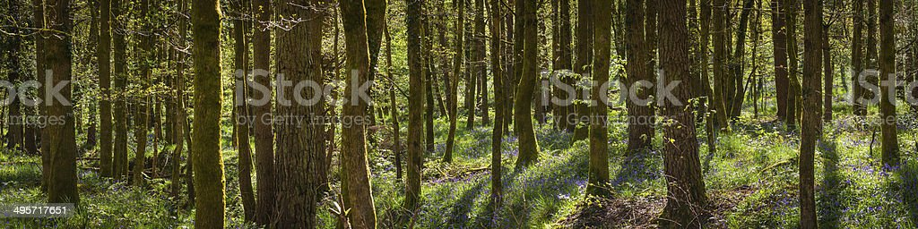 Summer in wild forest green landscape dense woodland panorama royalty-free stock photo
