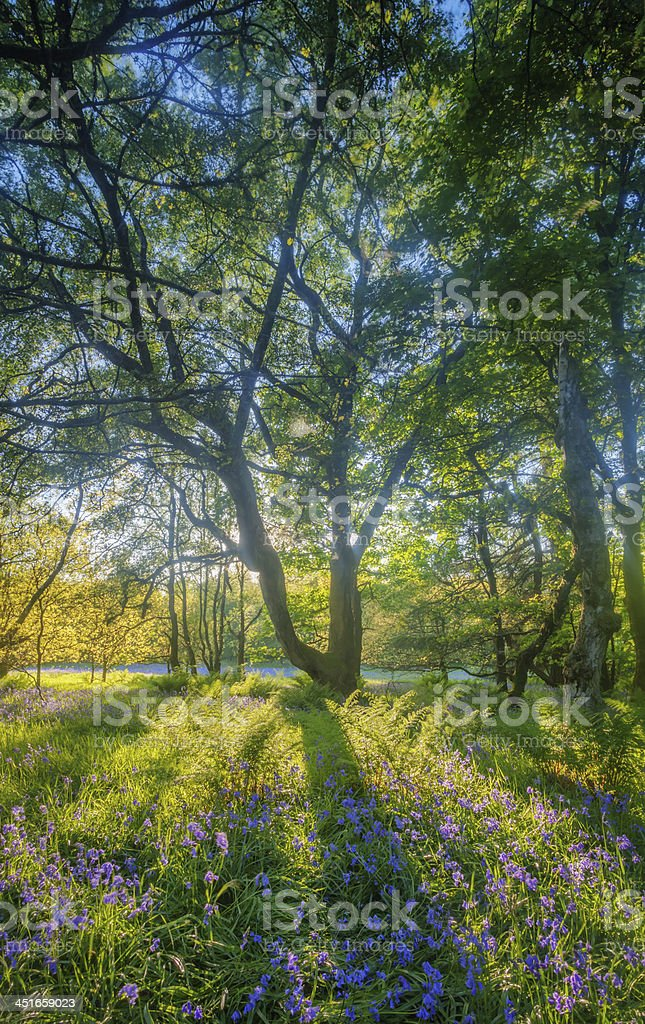 Summer in woodland forest. stock photo