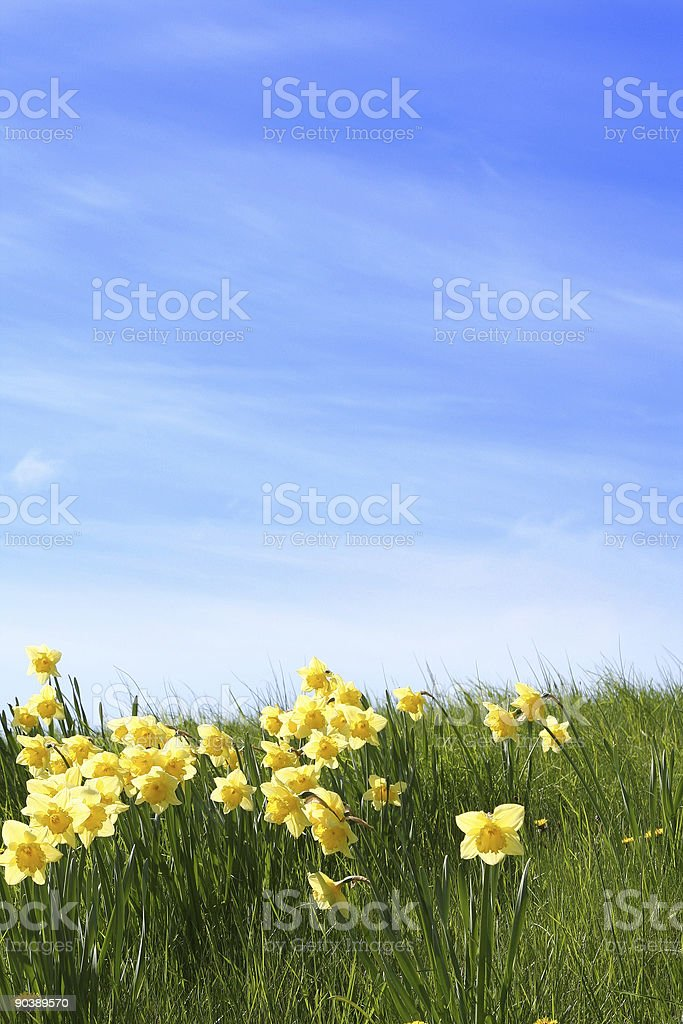 Summer Is Coming stock photo