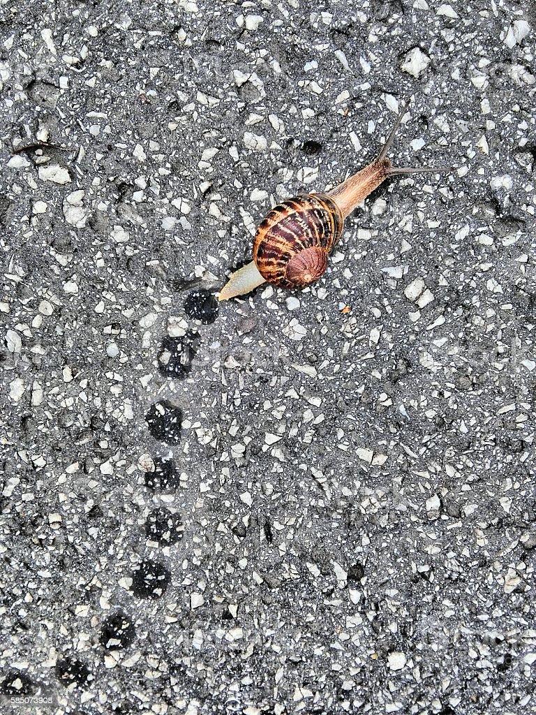 Summer land snail stock photo