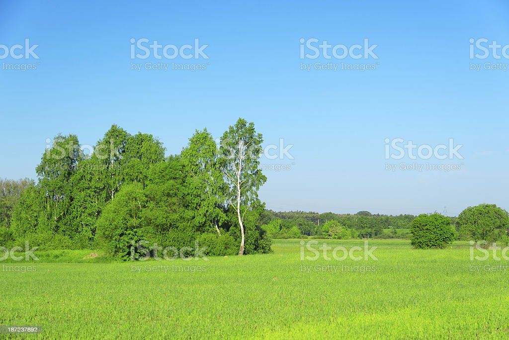 Summer Landscape - 36 Mpx royalty-free stock photo