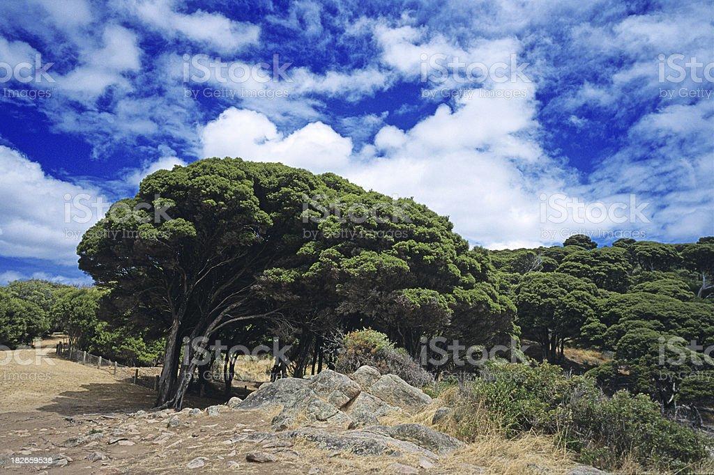 Summer Landscape Australia royalty-free stock photo