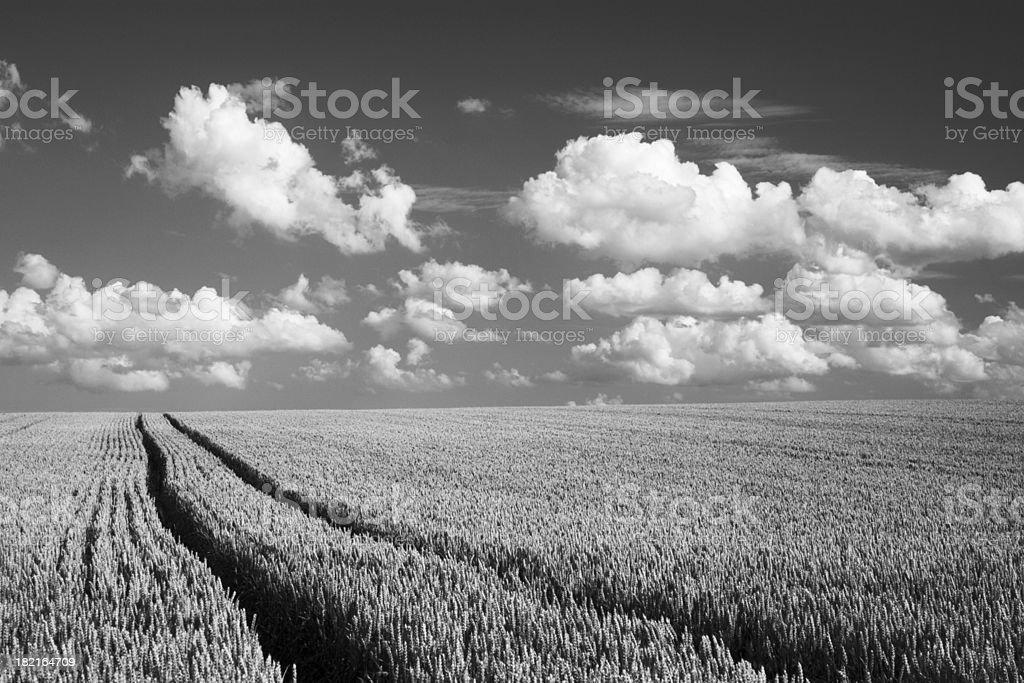 Summer Landscape Dramatic Sky royalty-free stock photo