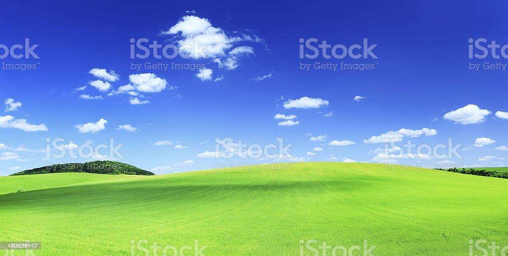 Summer Landscape - Green Grass, Field, Meadow XXXL image royalty-free stock photo