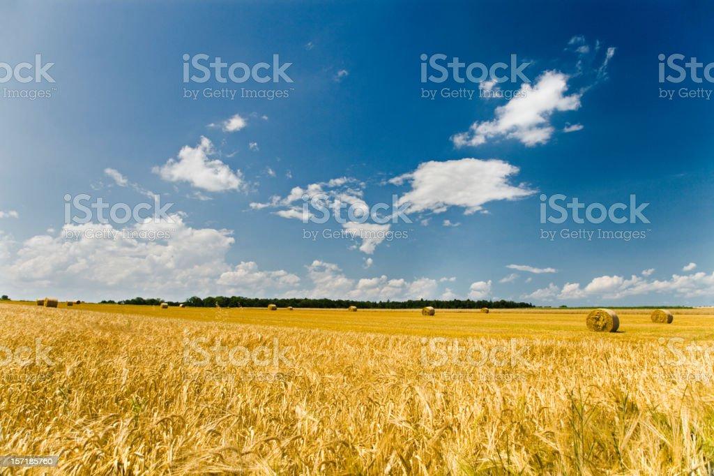 Summer Landscape Harvest stock photo