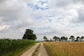 Summer Landscape / Harvest