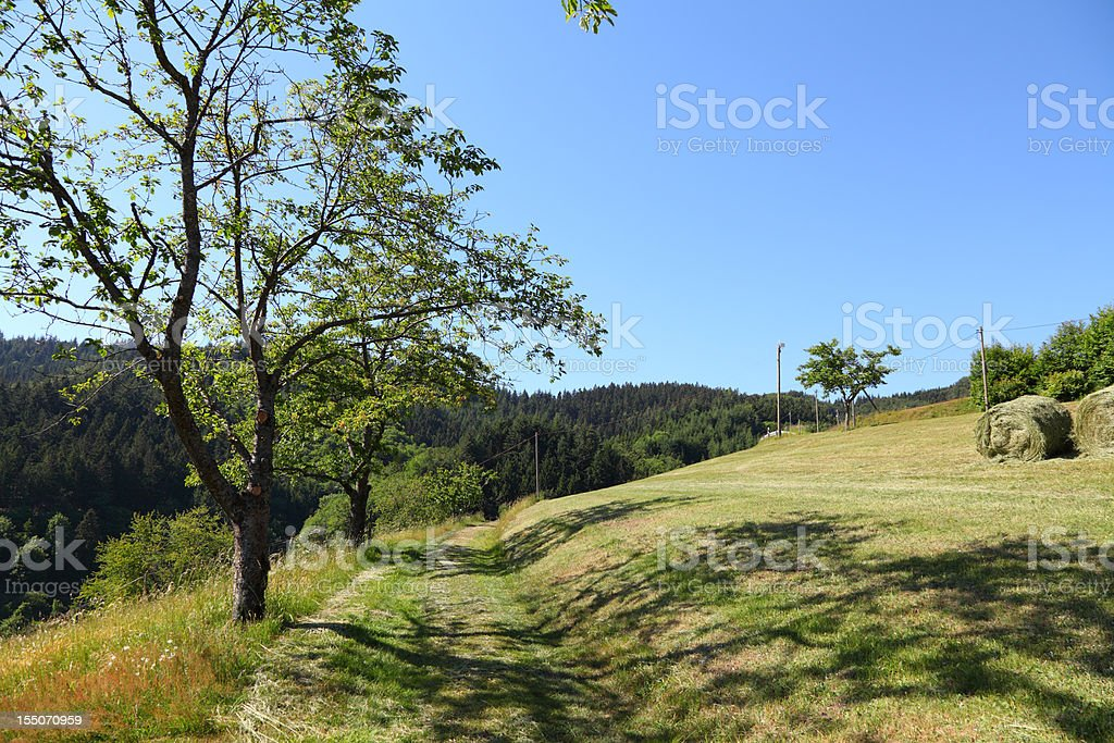 summer landscape in Black Forest royalty-free stock photo