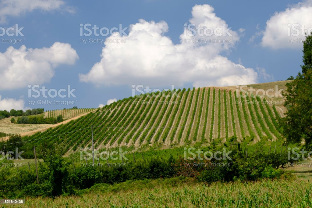 Summer landscape in Romagna (Italy) stock photo