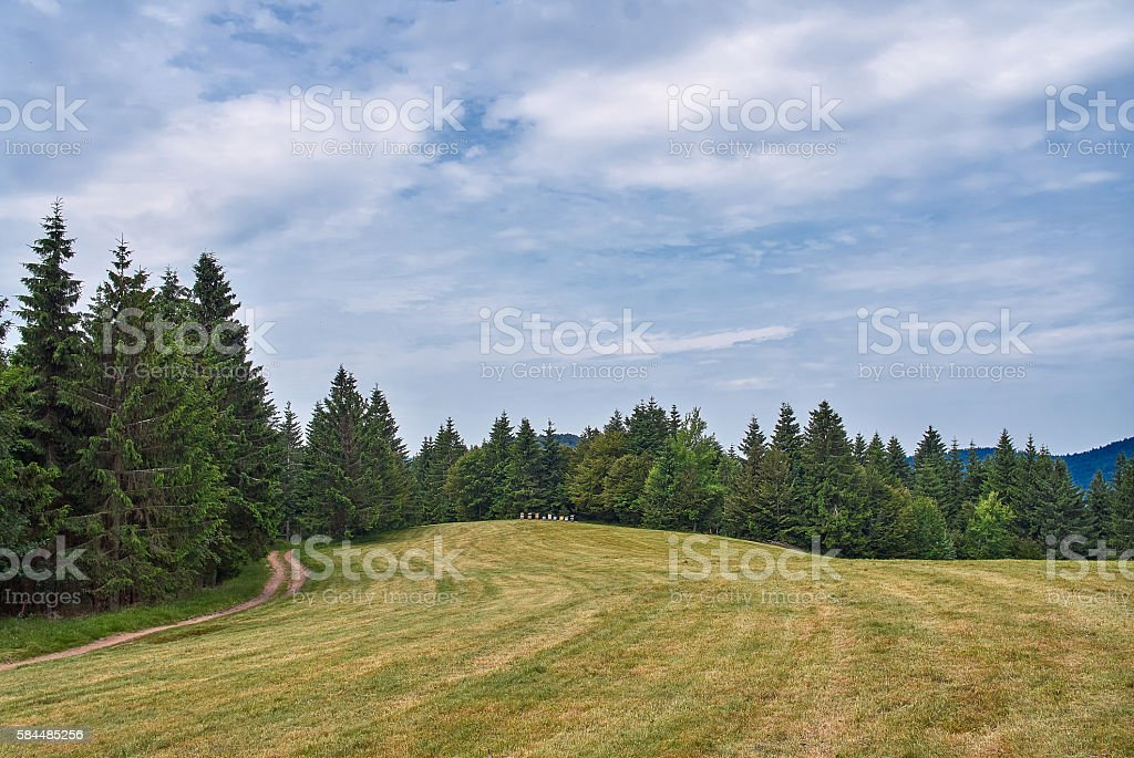Summer landscape in the Vosges mountains stock photo